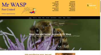 Mr Wasp